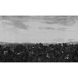 658-31 - Löfstad - Oak view...